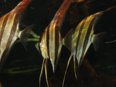 nowa-dostawa-ryb-kolumbia-wenezuela-08112017