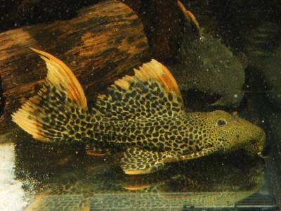 nowa-dostawa-ryb-brazylia-12012018